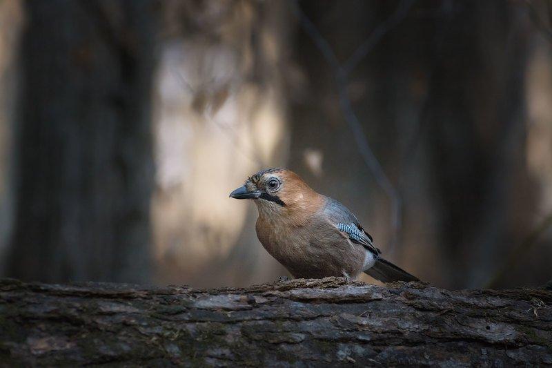 Где-то в лесах Приморьяphoto preview