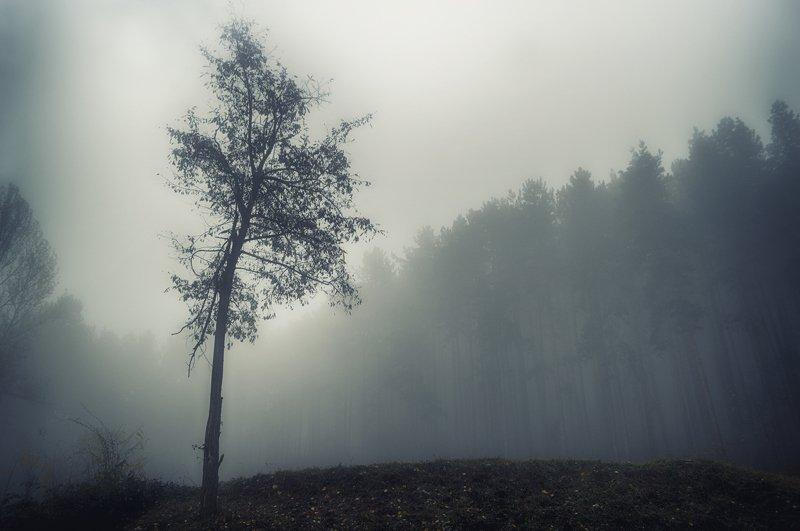 autumn, sadness, forest, trees, landscape, fog, осень, грусть, лес, деревья, пейзаж, туман Autumn sadnessphoto preview