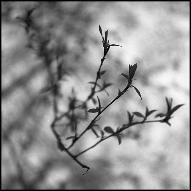 листики, весна Листикиphoto preview