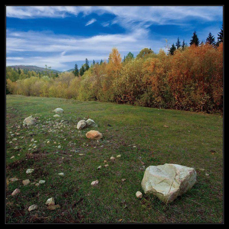 лес, небо, осень Спелые плоды и молодые всходыphoto preview