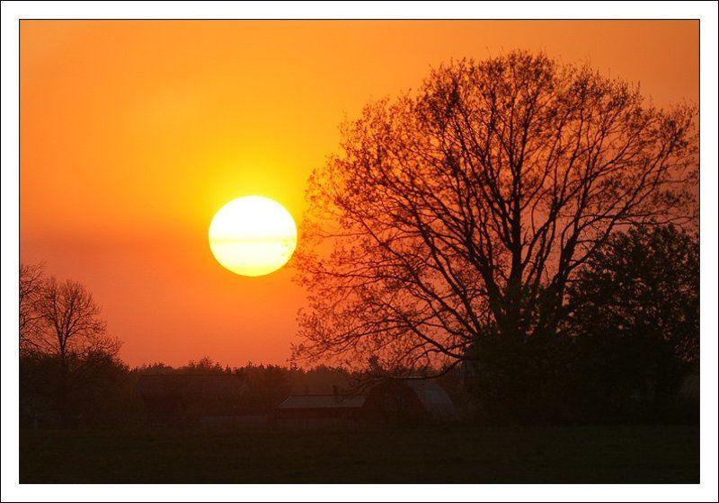 закат, дерево, солнце Деревенская закатнаяphoto preview
