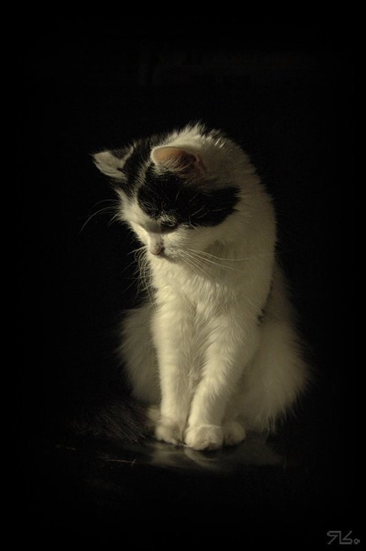 котяйка,  кошка, бестия, кнопка Милая бестиЯphoto preview