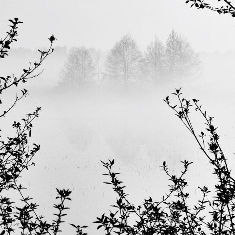 будущее, ветки, чб, туман НЕидеальный пейзажphoto preview