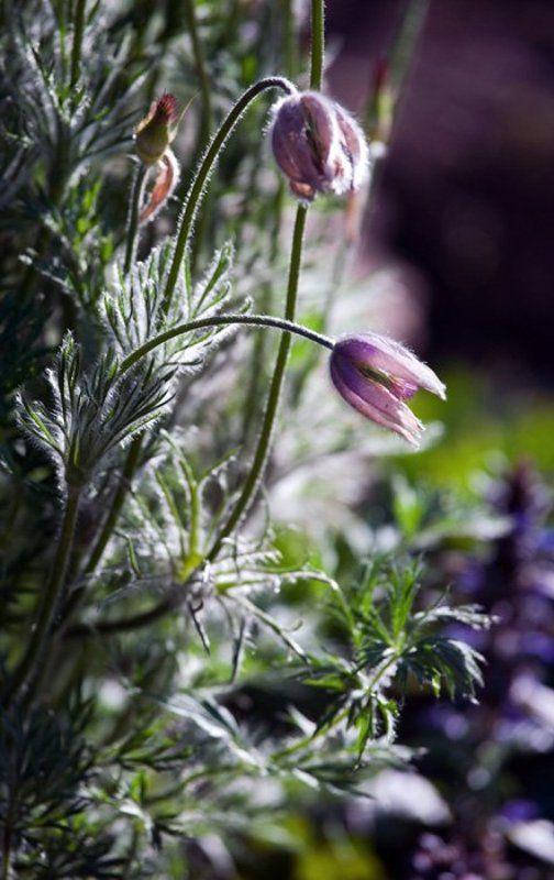 цветок, весна Веснаphoto preview