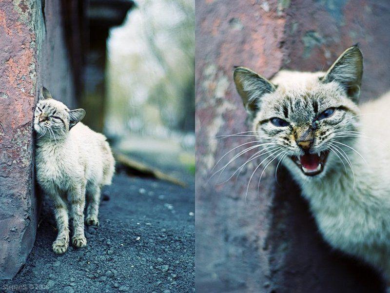 котофото кот город *photo preview