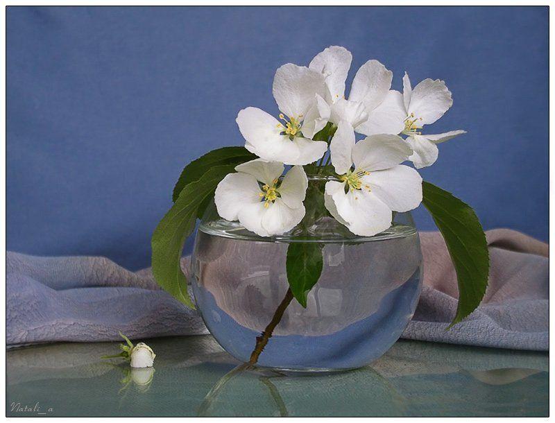 весна, цветы Весеннийphoto preview