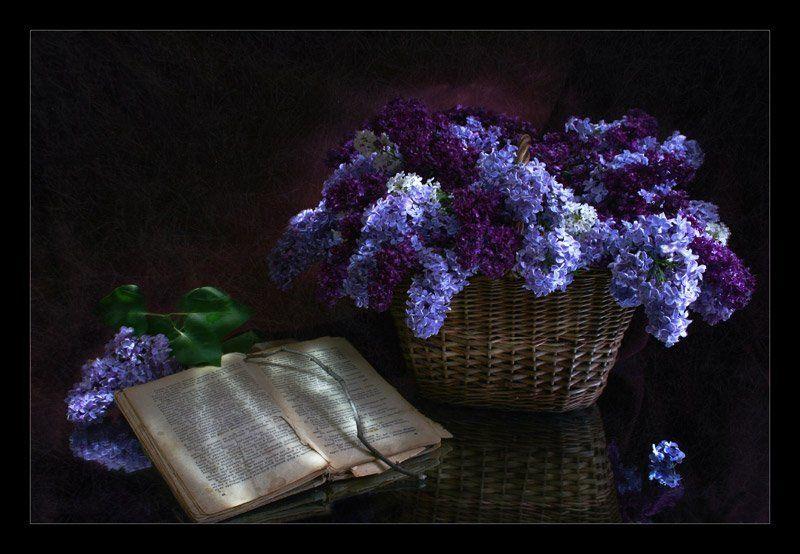 сирень, книга, ночь, световая кисть Нежность Ночиphoto preview