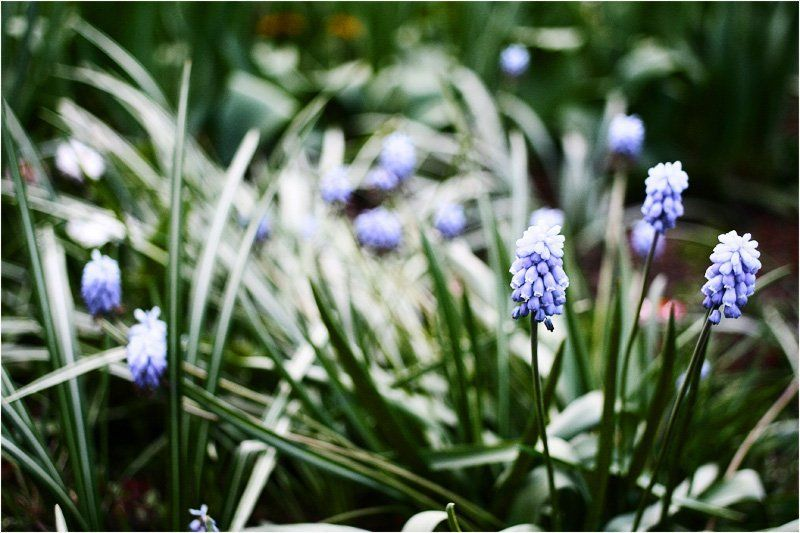 green, blue, flowers G&Bphoto preview