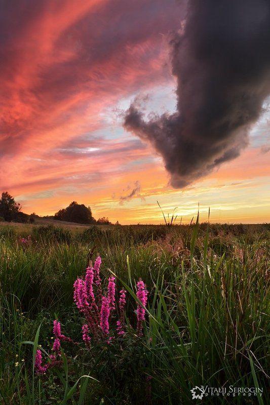 поле, небо Моё полеphoto preview