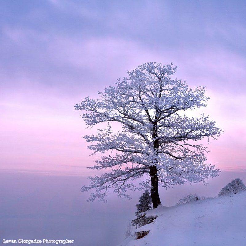 My Treephoto preview
