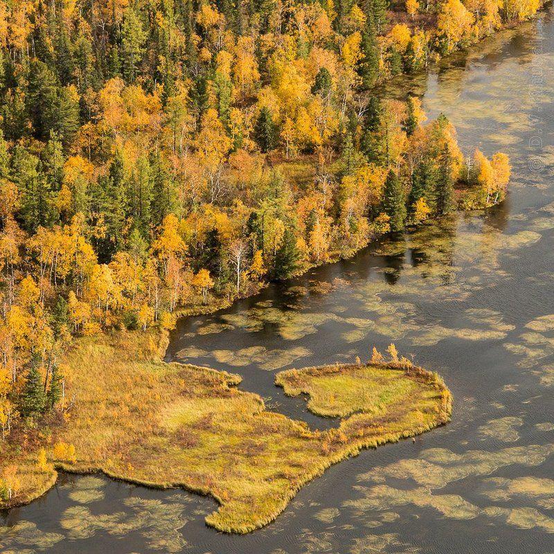 север, путешествия, природа, осень, аэросьемка, Осенние краски лесотундрыphoto preview