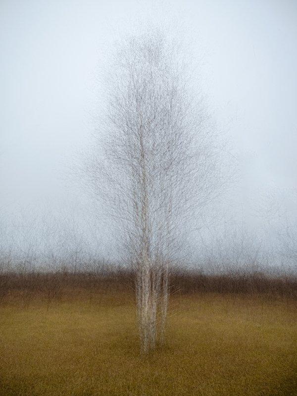 Иллюзия ветра, иллюзия мира...photo preview
