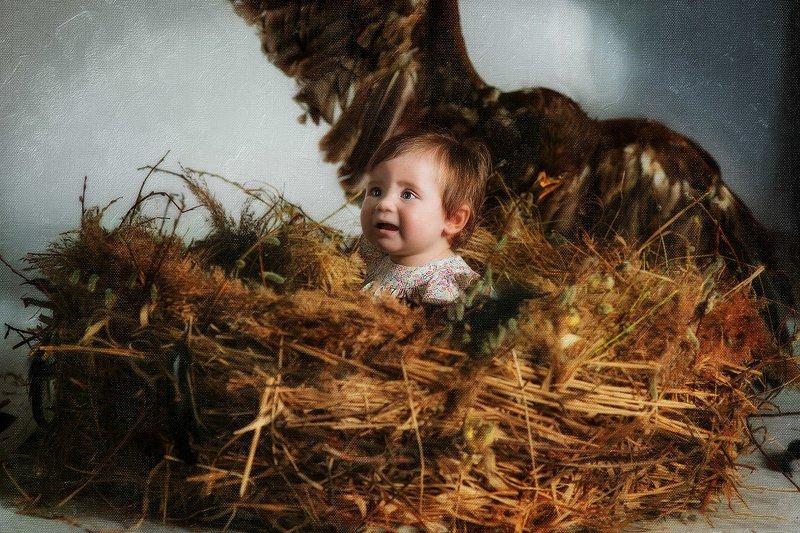 орел дети ребенок гнездо картина Птицыphoto preview