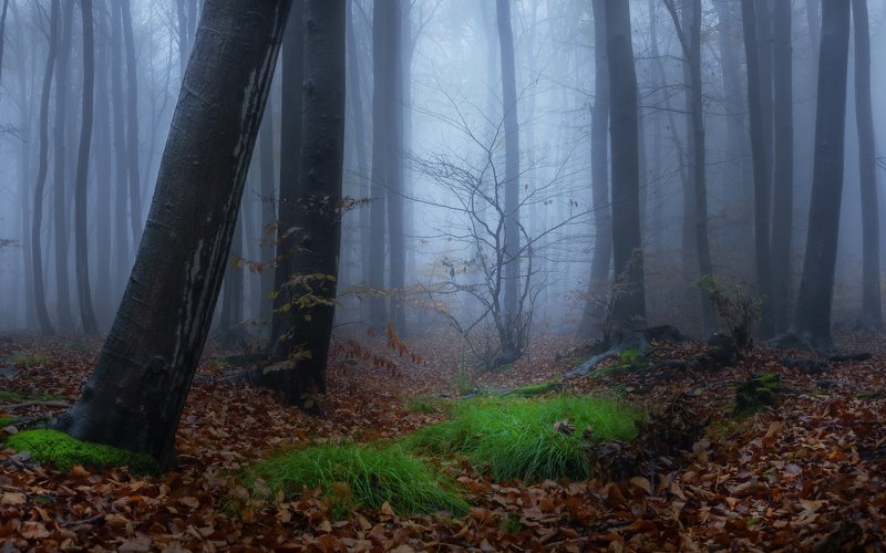 forest, rain, green, trees, autumn, fog, misty Mount Ślęża and its misty forestphoto preview