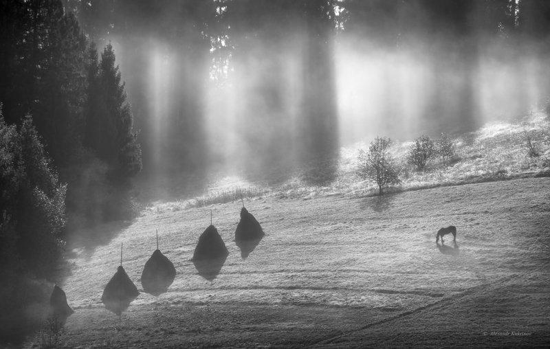 карпаты, осень, пейзаж, утро, рассвет, туман Утро в Карпатах...photo preview
