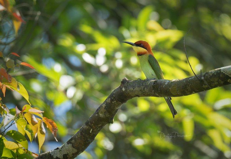 природа, животные, птицы, вьетнам, остров фукок В тени жаркого дняphoto preview