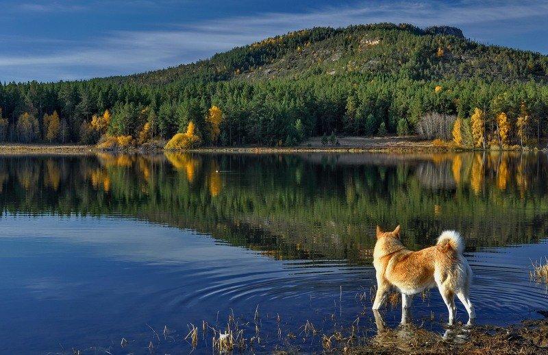 горы озеро Утро на озере.photo preview