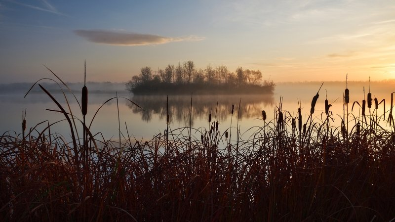 lake, reed, sunrise, pond In the reedsphoto preview