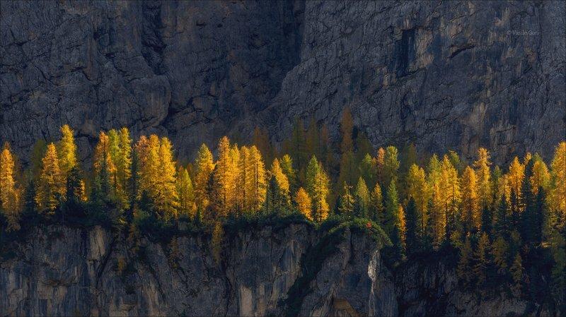 доломитовые альпы,лиственица,осень,италия,свет,alps, \