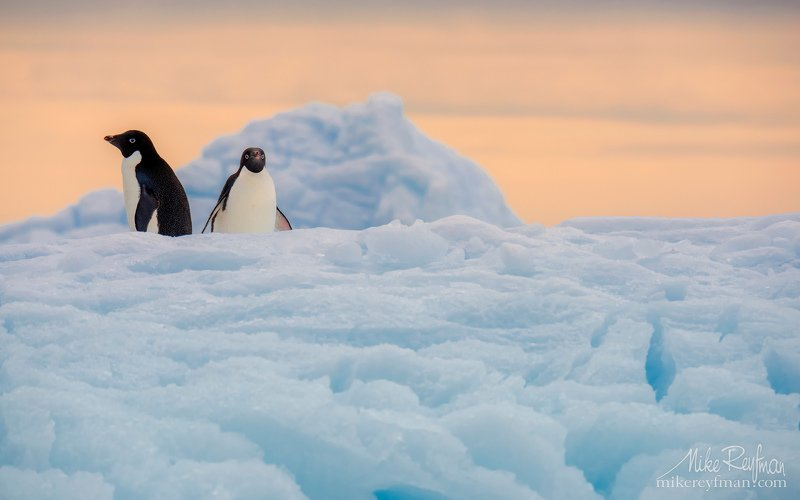 dramatic, polar climate, antarctic, antarctica, cold, romantic, extreme, adelie penguin Rазмолвкаphoto preview