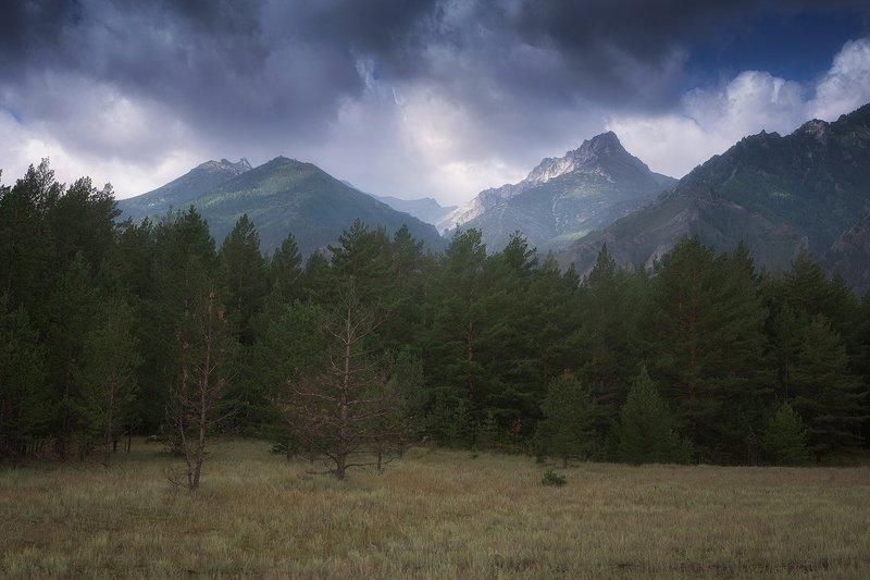 россия,бурятия,алла,долина,баргузинская долина,горы,деревья,тучи,пейзаж,фото,дмитрий подкопаев По дороге в долину.photo preview