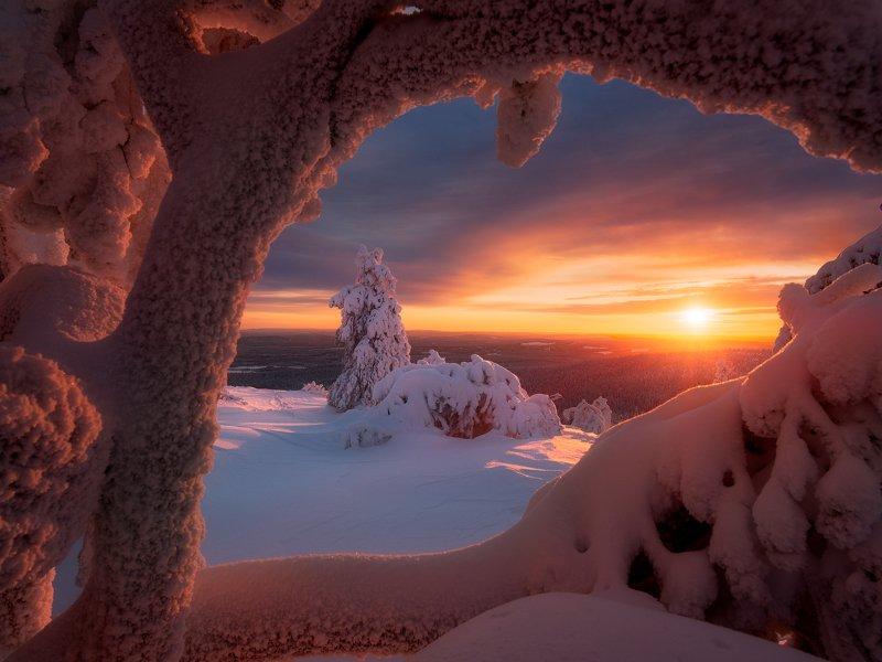 зима, снег, елка, вечер, закат, небо, солнце Взгляд зимыphoto preview