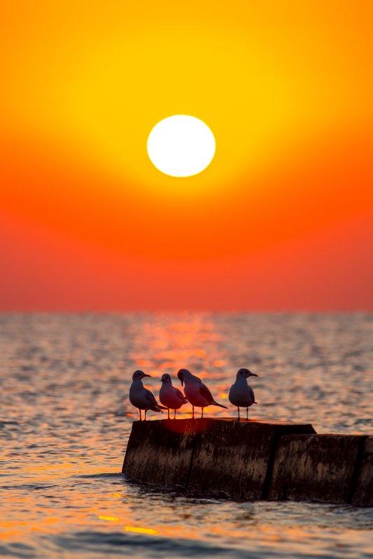 Кипр, Восход солнца, чайки, ярко-оранжевое, оранжевый, солнце, море На Кипре Утроphoto preview