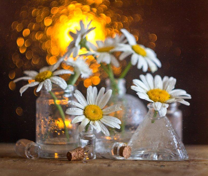 ромашки, натюрморт, боке, цветы, брызги, вода, закат, солнце, бутылки, банки, стекло, красивый, лето, still life Ромашковыйphoto preview