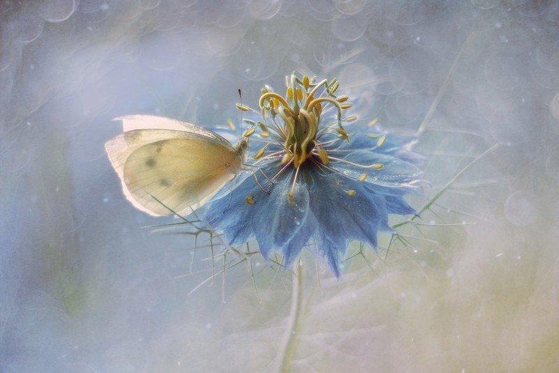 macro, butterfly, flower Butterflyphoto preview