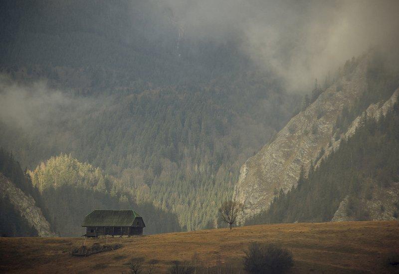landscape beautiful autumn fog tree photography comsa bogdan   Late autumnphoto preview