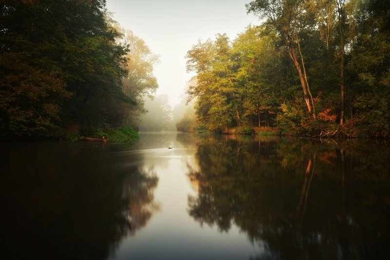 river, autumn, fog, mist, By the riverphoto preview