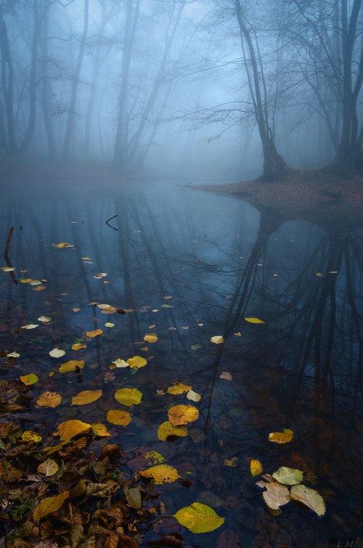 туман, лес, болото, осень, пейзаж, утро, листья, misty, autumn, deep, colors, fog, morning, fall, forest, swamp, water, foggy dawn, Landscape, blue ***photo preview