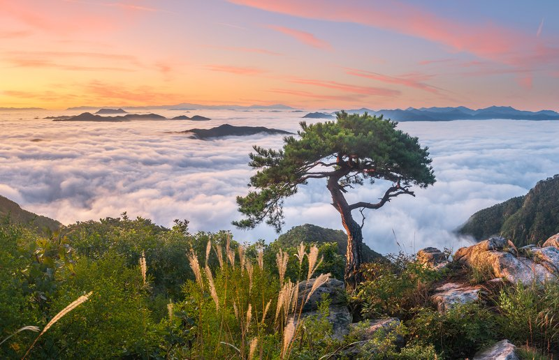 mountains,peak,hiking,fog,clouds,autumn The lonely treephoto preview