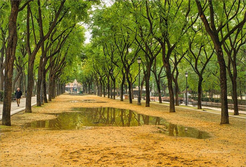 парк, осень, лужа, зелень, деревья Осеньphoto preview