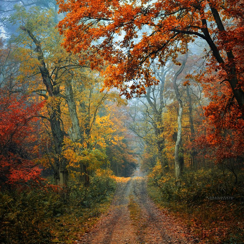 осенняя дорога autumn road forest path mist magic foggy morning trees colours paint tree Осенняя дорогаphoto preview