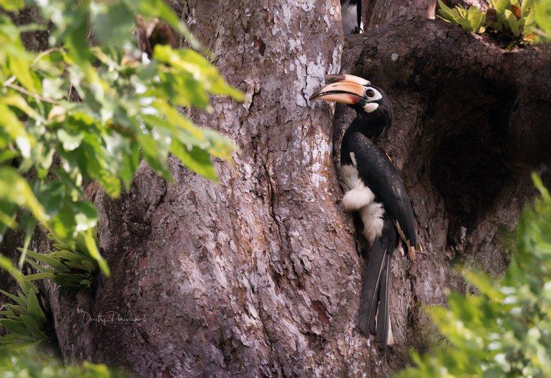 природа, животные, птицы, вьетнам, остров фукок Поиски гнездаphoto preview