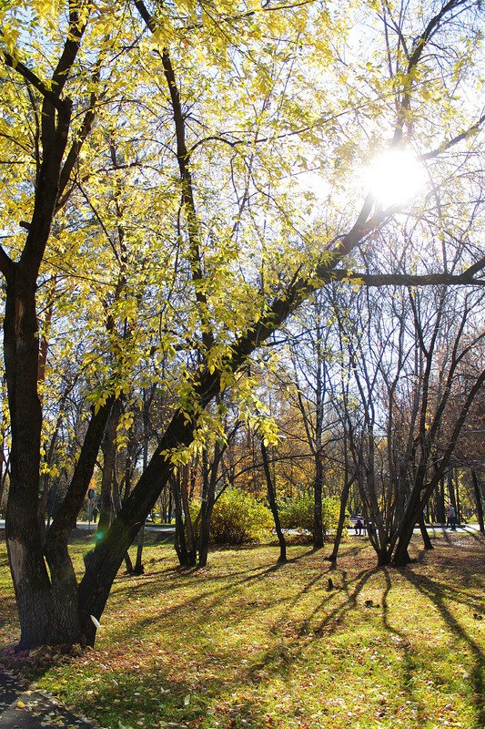 осень, в парке, октябрь photo preview