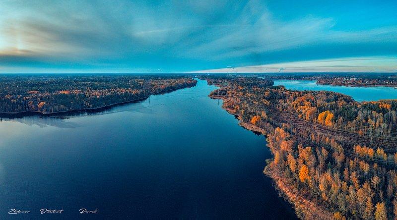 Синела осень золотая.photo preview