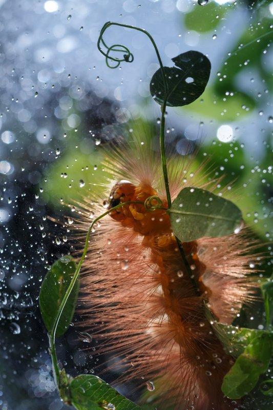Дама с зонтиком:)photo preview
