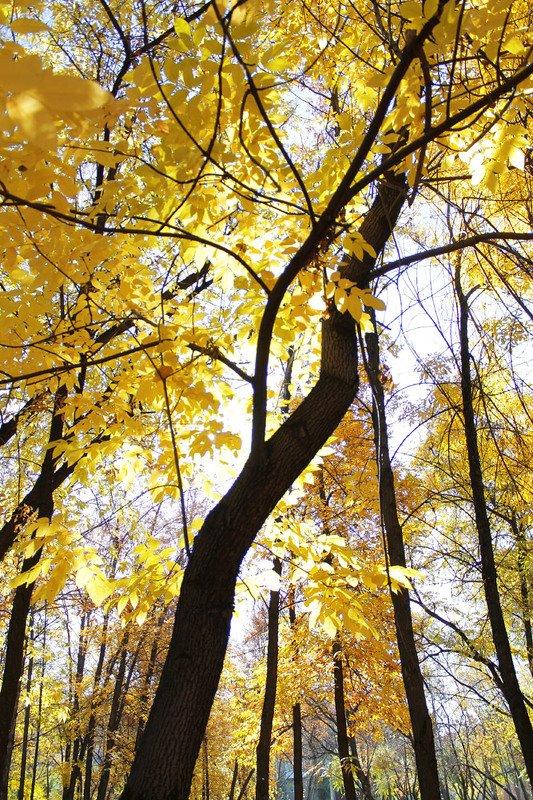 осень, в парке, октябрь *photo preview