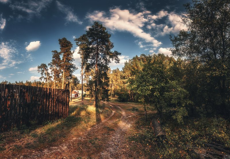 деревня, лес photo preview