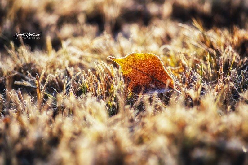 макро, природа, утро, macro, nature, outdoor, morning, frozen, bokeh, blur. Замороженная утренняя красотаphoto preview