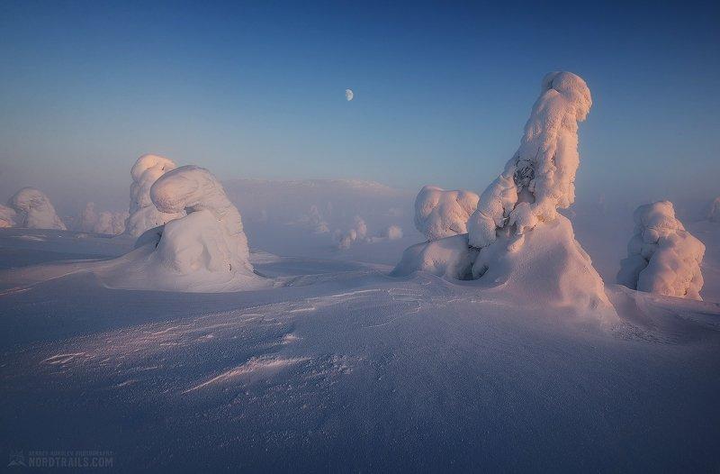кольский, кольский полуостров, кандалакша, зима, winter, snow, north Волостные обитателиphoto preview