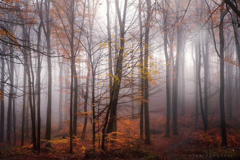 таинственный, лес,zanfoar,czech republic,nikon d750,nature,landscapes,чехия таинственный лесphoto preview