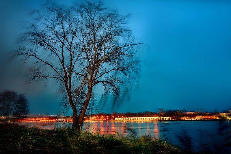 дерево,природа, река, волхов, великий новгород, пейзаж Дерево на берегу Волховаphoto preview
