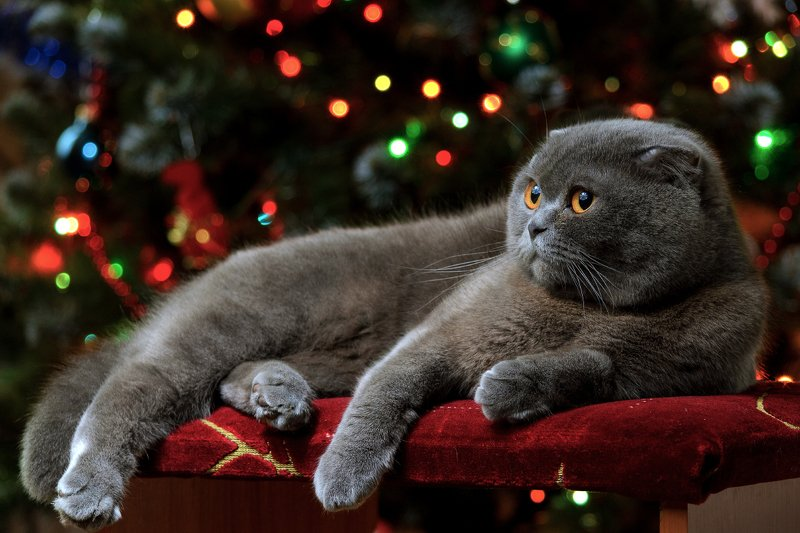 кот, новый год, ёлка, гирлянда, новогодние огни Новогодний котphoto preview
