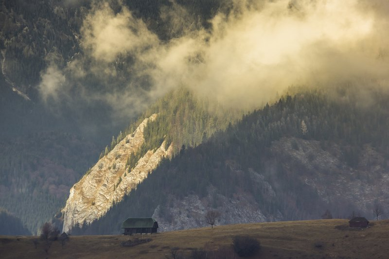 fog autumn photography beautiful Fogphoto preview