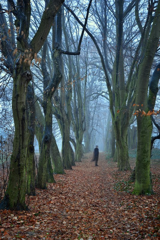 привидение ghost spook alone in park trees magic foggy morning path autumn fall mist dranikowski zjawa fog привидениеphoto preview