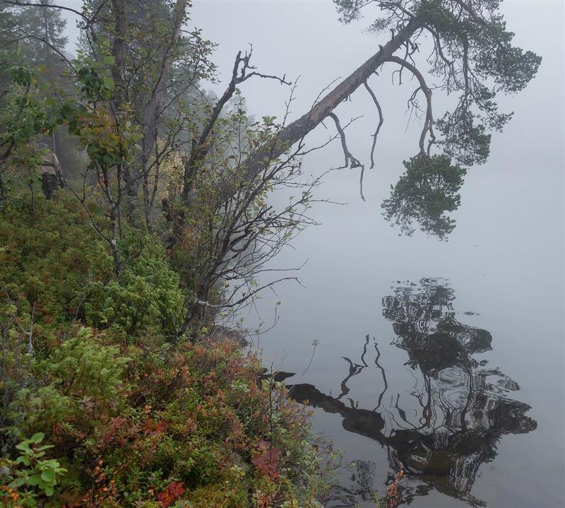 foggy morning, fog, туман, кольский Silencephoto preview