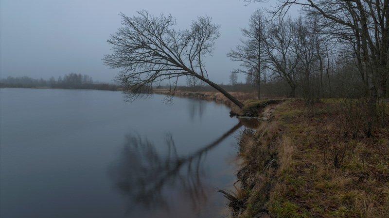 река, зима, дуб, берег, отражение, пасмурно Дерево над рекойphoto preview